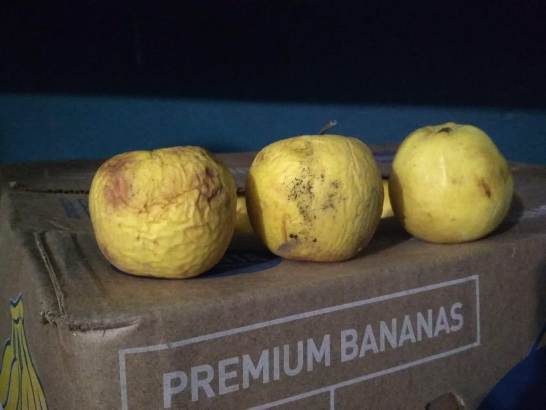 Минулорічні яблука, металеві клітки та туберкульоз: як пройшов моніторинг Херсонської області